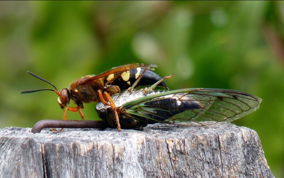 Hybrid Learning, Cicada Killers & the Next Big Fight