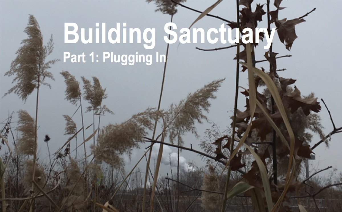Building Sanctuary: A Dystopian Future We Must Fight To Avoid