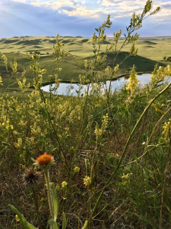 Prairie Solstice